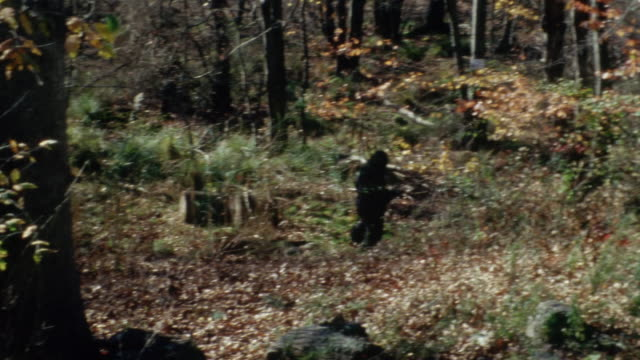 Shaky long shot of man in ape suit running through woods