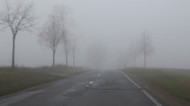 vídeos de stock, filmes e b-roll de shaky tracking shot on a country road that is lost in the mist / on some trees are mistletoes to see in winter time in germany near berlin in the... - trepadeira