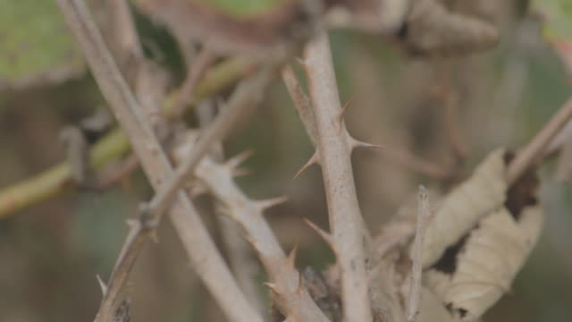 shallow depth of field shot of the thorns on a plant. - dornig stock-videos und b-roll-filmmaterial