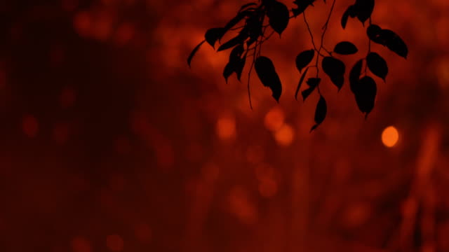 shallow focus on the tree branch leave fire forest wildfire at night - ash stock videos & royalty-free footage