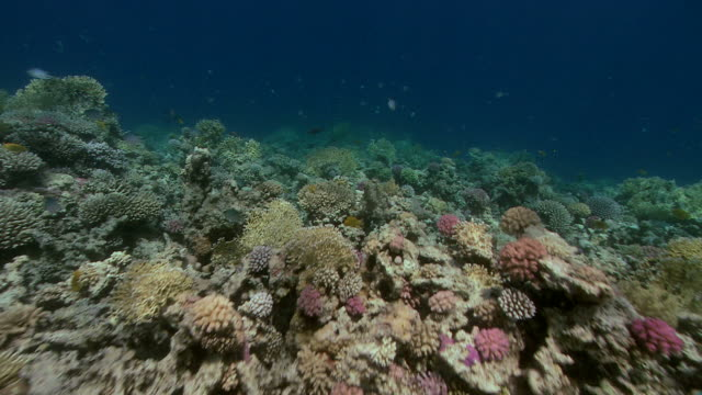 shallow hard coral reef. filmed in the red sea - hard coral stock videos & royalty-free footage
