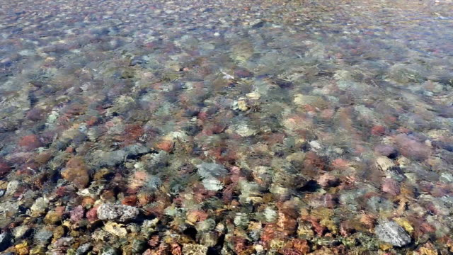 shallow mountain stream with rocky bottom - glacier national park us stock videos and b-roll footage