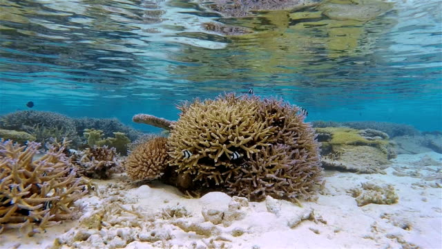 shallow water coral reef on maldives - south ari atoll - shallow stock videos and b-roll footage
