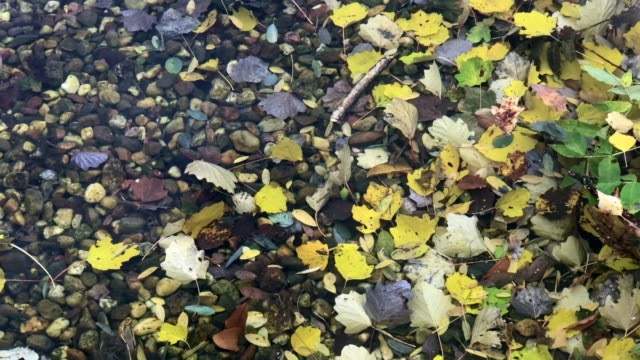 shallow water strewn with autumnal folaige - shallow stock videos & royalty-free footage