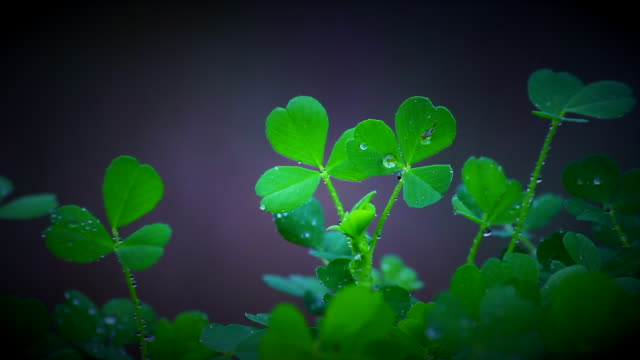 shamrock - vignette stock videos & royalty-free footage