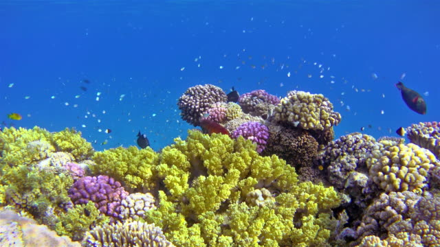 shams alam coral reef on red sea / egypt - reef stock videos and b-roll footage
