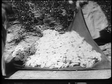 vídeos de stock, filmes e b-roll de b/w 1920 2 sharecropper women picking up blanket filled with newly-picked cotton outdoors - 1920