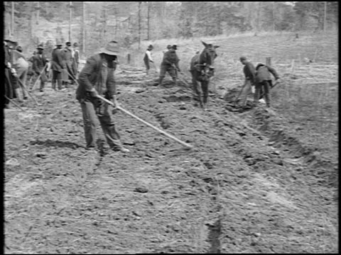 B/W 1920 sharecroppers hoeing field / one tills with mule / Southern US / documentary