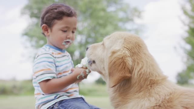 sharing ice cream with a dog - sharing stock videos & royalty-free footage