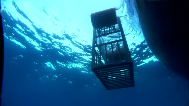 A Shark Cage Bobs In The Mediterranean Sea Next To A Boat