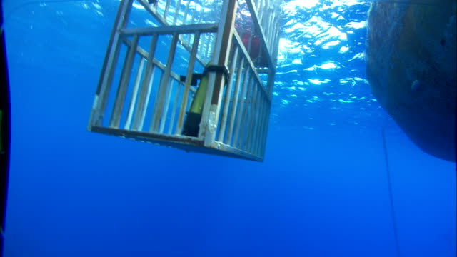 a shark cage bobs in the water alongside a boat. available in hd. - cage stock videos & royalty-free footage