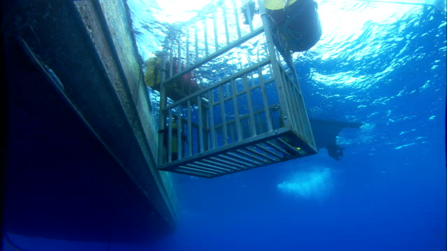 A shark cage is launched off the side of a boat. Available in HD.