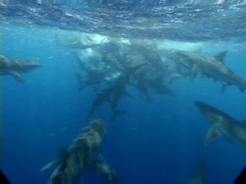 shark charge - bikini stock videos & royalty-free footage