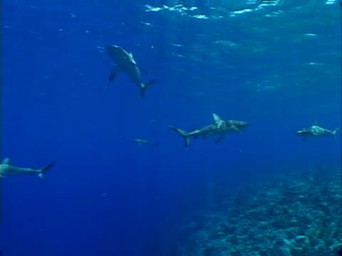 shark close-up - bikini stock videos & royalty-free footage