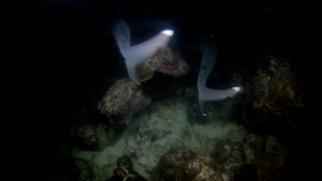 サメの夜 - ネムリフカ点の映像素材/bロール