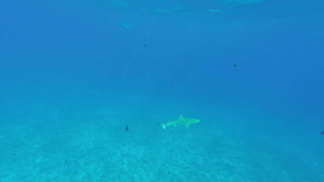 shark in the sea - tahitian culture stock videos & royalty-free footage