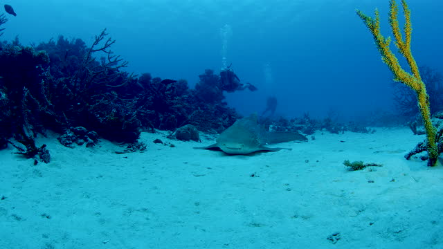 shark lying on seabed among rare hard corals endangered by deforestation - seabed stock videos & royalty-free footage