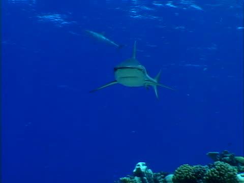 shark u-turn - bikini stock videos & royalty-free footage