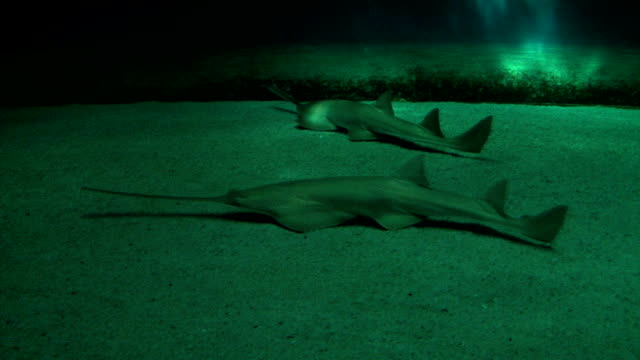 shark - standing water stock videos & royalty-free footage