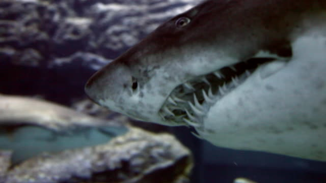 shark - animal fin stock videos & royalty-free footage