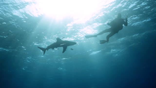 shark - oceanic white tip shark stock videos & royalty-free footage