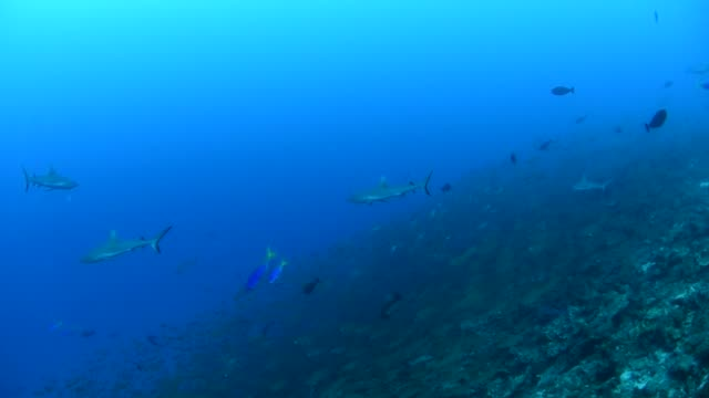 sharks at kwajalein atoll, marshall islands - micronesia stock videos & royalty-free footage