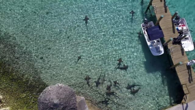 Sharks circling in shallow water, Exumas Bahamas AERIAL