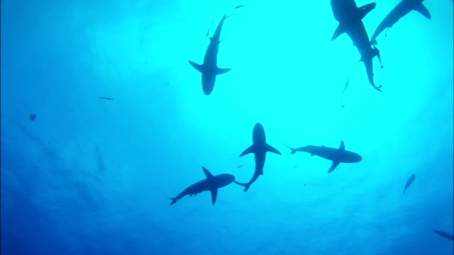 sharks filmed from below - 10 second clip - underwater stock videos & royalty-free footage