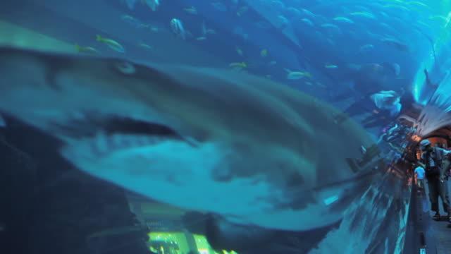 CU Sharks in aquarium at Dubai Mall / Dubai, United Arab Emirates