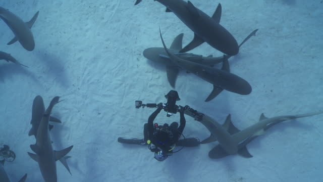 Sharks surrounding underwater photographer