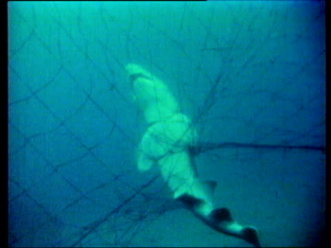 survival under threat lib shark tangled in fishing net fishermen pulling in net containing dead shark - survival stock videos and b-roll footage