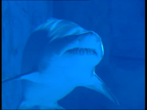 survival under threat ms shark swimming in tank en - survival stock videos and b-roll footage