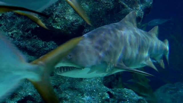 vídeos de stock, filmes e b-roll de tubarões nadando debaixo d'água - agressão