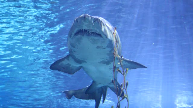 sharks swimming under water - aqualung diving equipment stock videos & royalty-free footage
