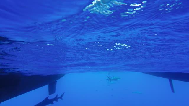 sharks - hull stock videos & royalty-free footage