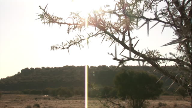 sharp, pointy thorns grow on a bush. - bush stock videos & royalty-free footage
