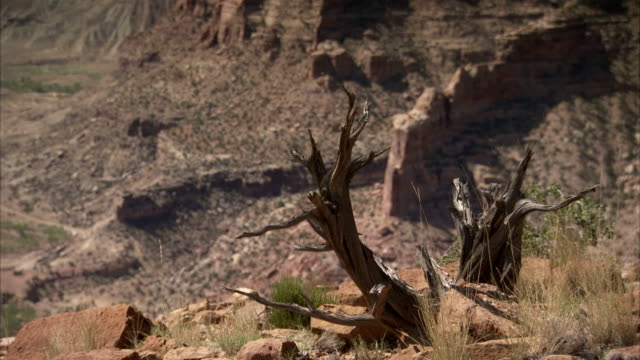 sharp twigs and jagged rock formations jut from the scrublands and canyons of utah. available in hd - shrubland stock videos & royalty-free footage