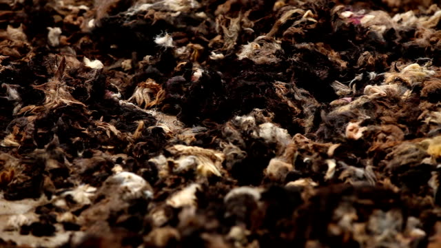 shearing wool - wool stock videos & royalty-free footage