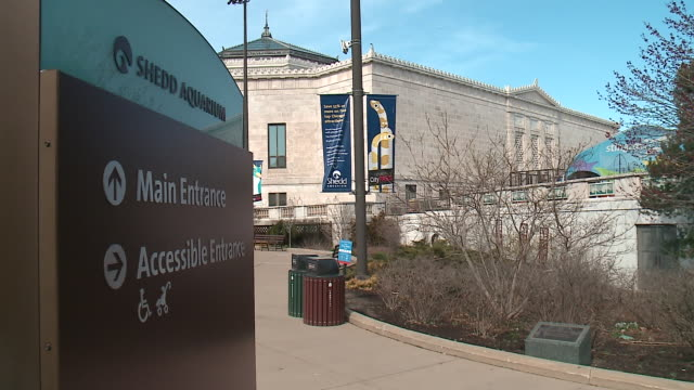 wgn shedd aquarium exterior in chicago on april 30 2018 - shedd aquarium stock videos and b-roll footage