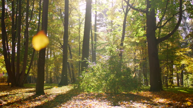 shedding autumn leaves falling in park - shed stock videos & royalty-free footage