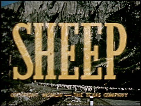 sheep - 1 of 23 - altri spezzoni di questa ripresa 2427 video stock e b–roll