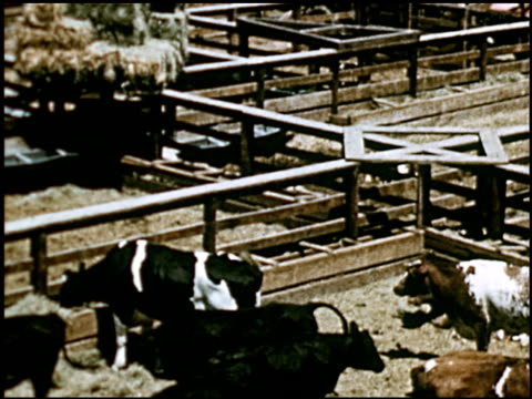 sheep - 22 of 23 - altri spezzoni di questa ripresa 2427 video stock e b–roll
