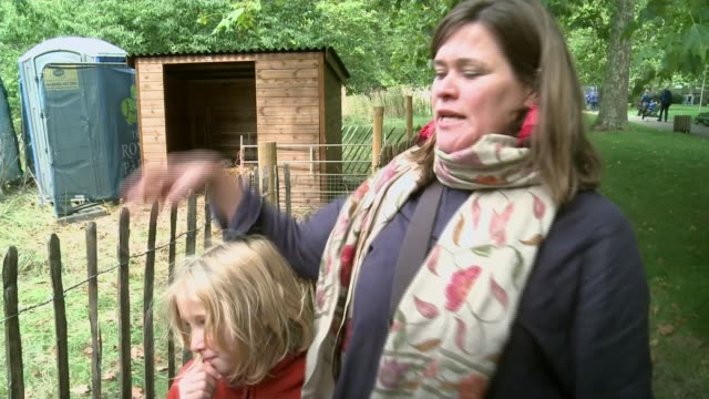sheep and cow begin weeklong graze in green park to boost wildlife uk london sheep and cow grazing in meadow in green park vox pops alice laughton... - wildlife conservation stock videos & royalty-free footage