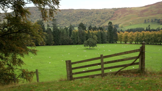 sheep and fence scotland - anhöhe stock-videos und b-roll-filmmaterial