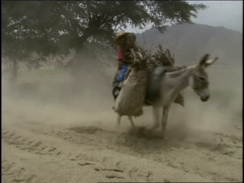 sheep and goats follow two children on a donkey down a dusty country road. - hooved animal stock videos & royalty-free footage