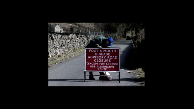 sheep breeds re-establishing themselves after foot and mouth disease outbreak; graphicised pictures sign warning of foot and mouth disease outbreak... - animal mouth stock videos & royalty-free footage