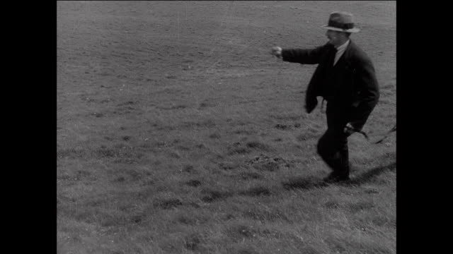 montage sheep dogs follows farmer as he rides horse across fields / aberystwyth, wales - aberystwyth stock videos & royalty-free footage