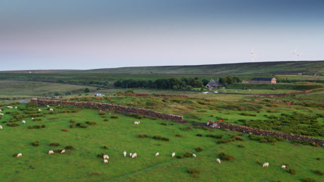 sheep farm in yorkshire - aerial view - pennines stock videos and b-roll footage