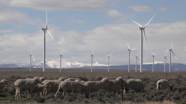 stockvideo's en b-roll-footage met schapen grazen fort bridger wyoming berg windpark windturbines besneeuwde pieken - wyoming