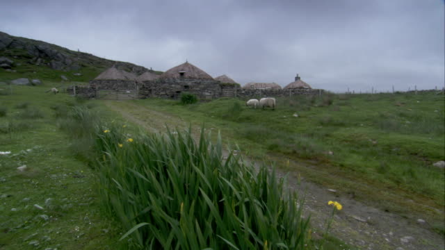vídeos de stock e filmes b-roll de sheep graze in a pasture near black house village in gearrannan scotland. available in hd. - telhado de palha